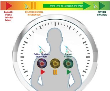 DARPA открывает программу «Биостаз» - 1