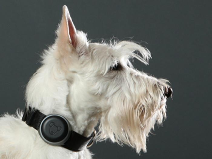 Как не дать своей собаке потеряться, или технологии приходят на помощь - 3