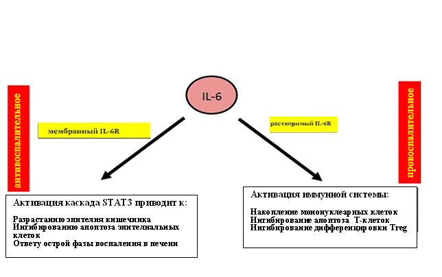 Ингибирование интерлейкина-6, как это может быть полезным? - 5