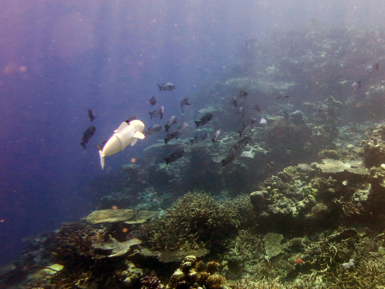 Роборыба, созданная учеными MIT, изучает коралловые рифы на Фиджи - 2