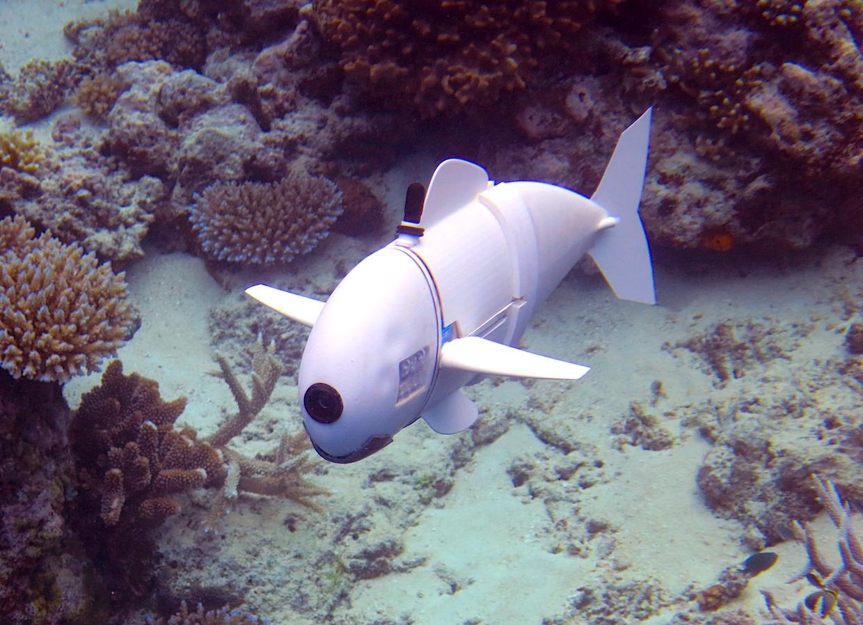 Роборыба, созданная учеными MIT, изучает коралловые рифы на Фиджи - 1