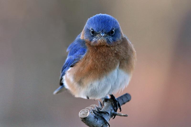 Bluebird: магия внутри - 1