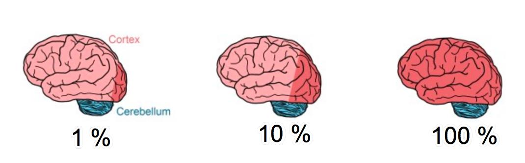 Новый алгоритм позволит симулировать нейронные связи целого мозга человека на будущих экзафлопных суперкомпьютерах - 2