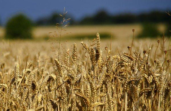 Лаборатория Alphabet X может взяться за сельское хозяйство - 1