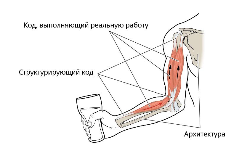 Анатомическая метафора кода. Где у кода мускулы - 1