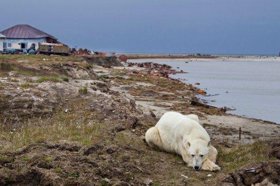Ученые рассказали, как возник остров Белый