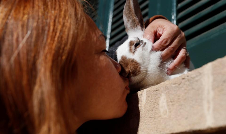 Люди десятилетиями верили в миф по поводу одомашнивания кроликов - 1