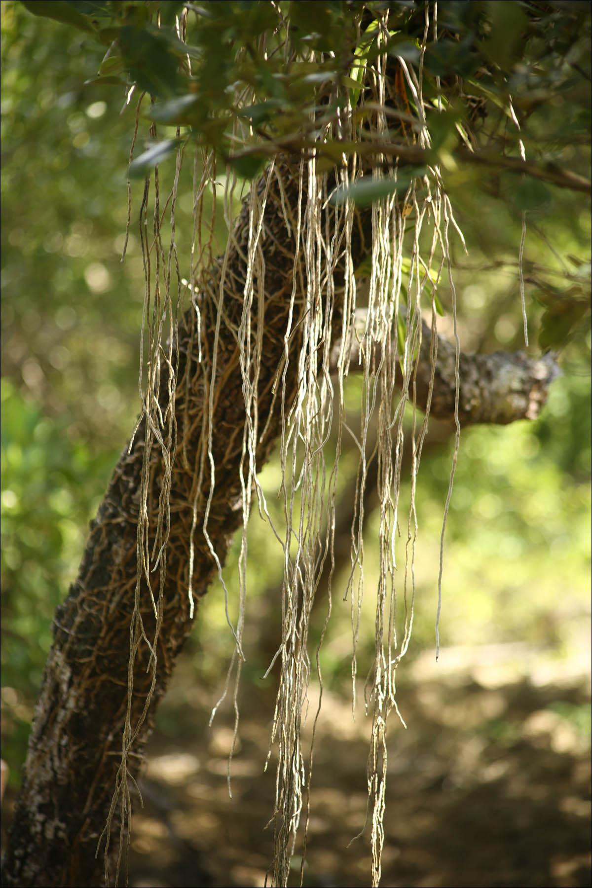 Мангровый лес: крутейший биом планеты - 10