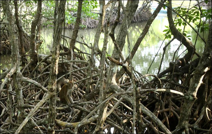 Мангровый лес: крутейший биом планеты - 16