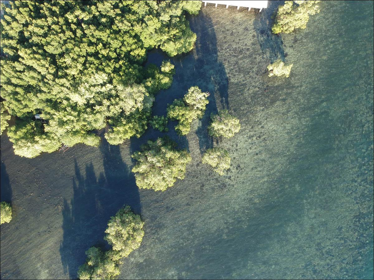 Мангровый лес: крутейший биом планеты - 6