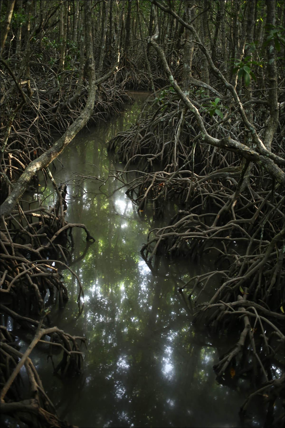 Мангровый лес: крутейший биом планеты - 1