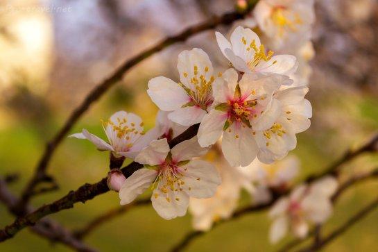 Ученые нашли белок, который провоцирует цветение деревьев