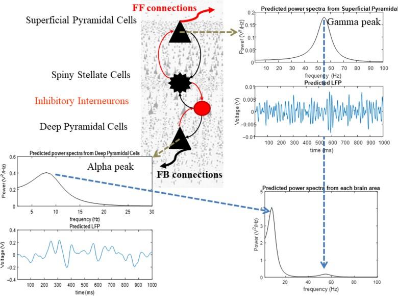 При перегрузке рабочей памяти у человека нарушается синхронизация между тремя отделами мозга - 1