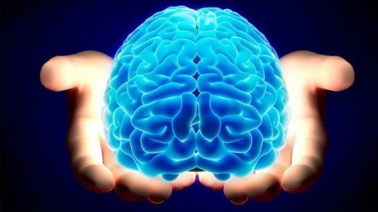Головной мозг финансистов имеет особенности