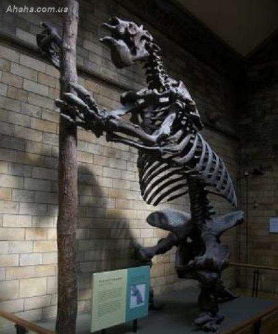 По мнению ученых, доисторические животные умерли именно из-за людей