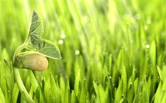 Ученые заявили, что растения могут общаться между собой
