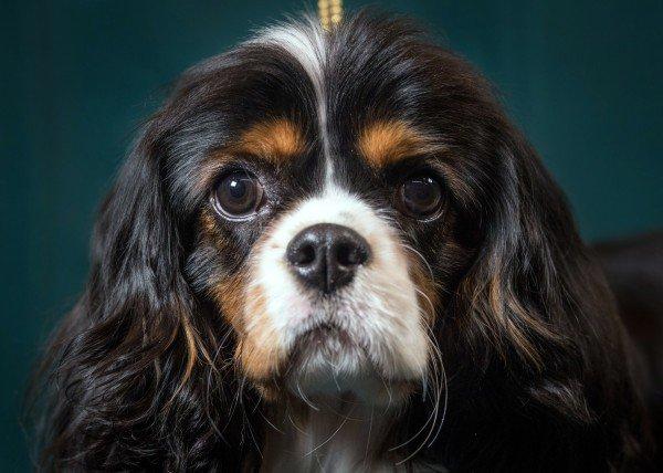 Стартап из Гарварда планирует научиться омолаживать людей и животных. Начнут с собак - 4