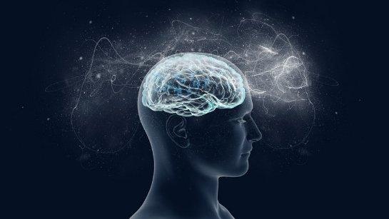 Социальная изоляция трансформирует мозг