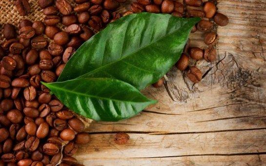 Ученые рассказали о пользе чая из листьев кофе