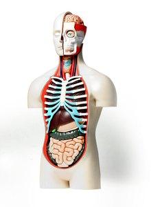 Искусственные органы: человек умеет все