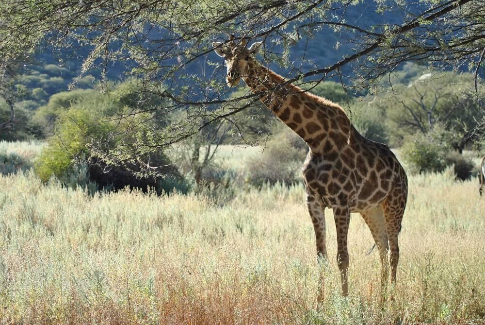 От гудения жирафов до звуков птиц-подражателей — слушаем природу вместе - 1