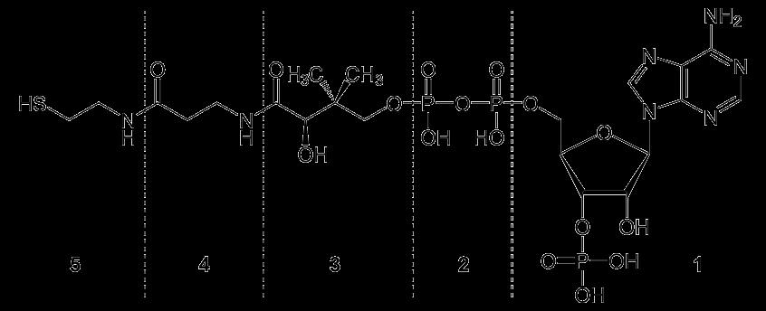 Д-пантенол: препарат для добра - 3