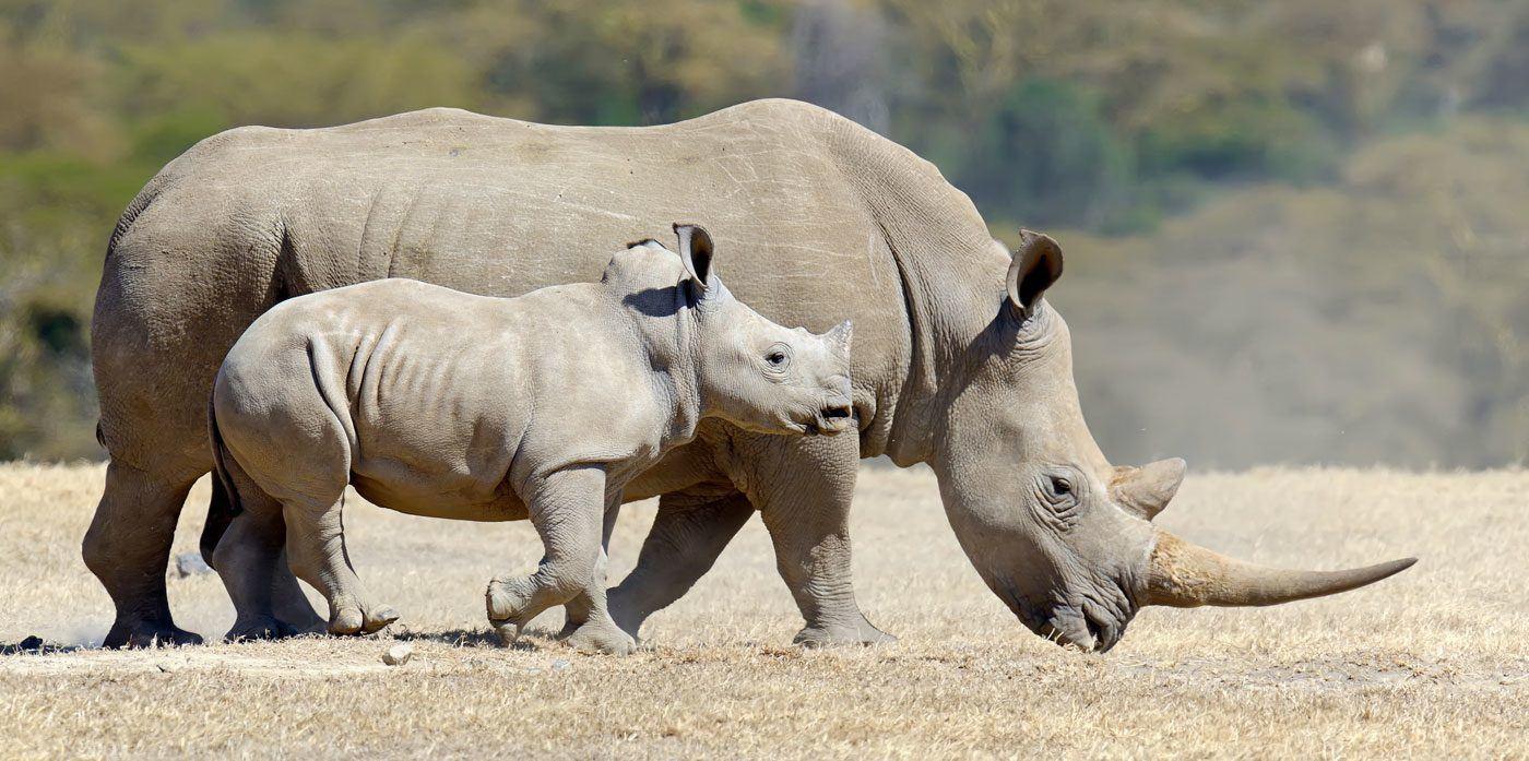 IoT для носорогов - 1