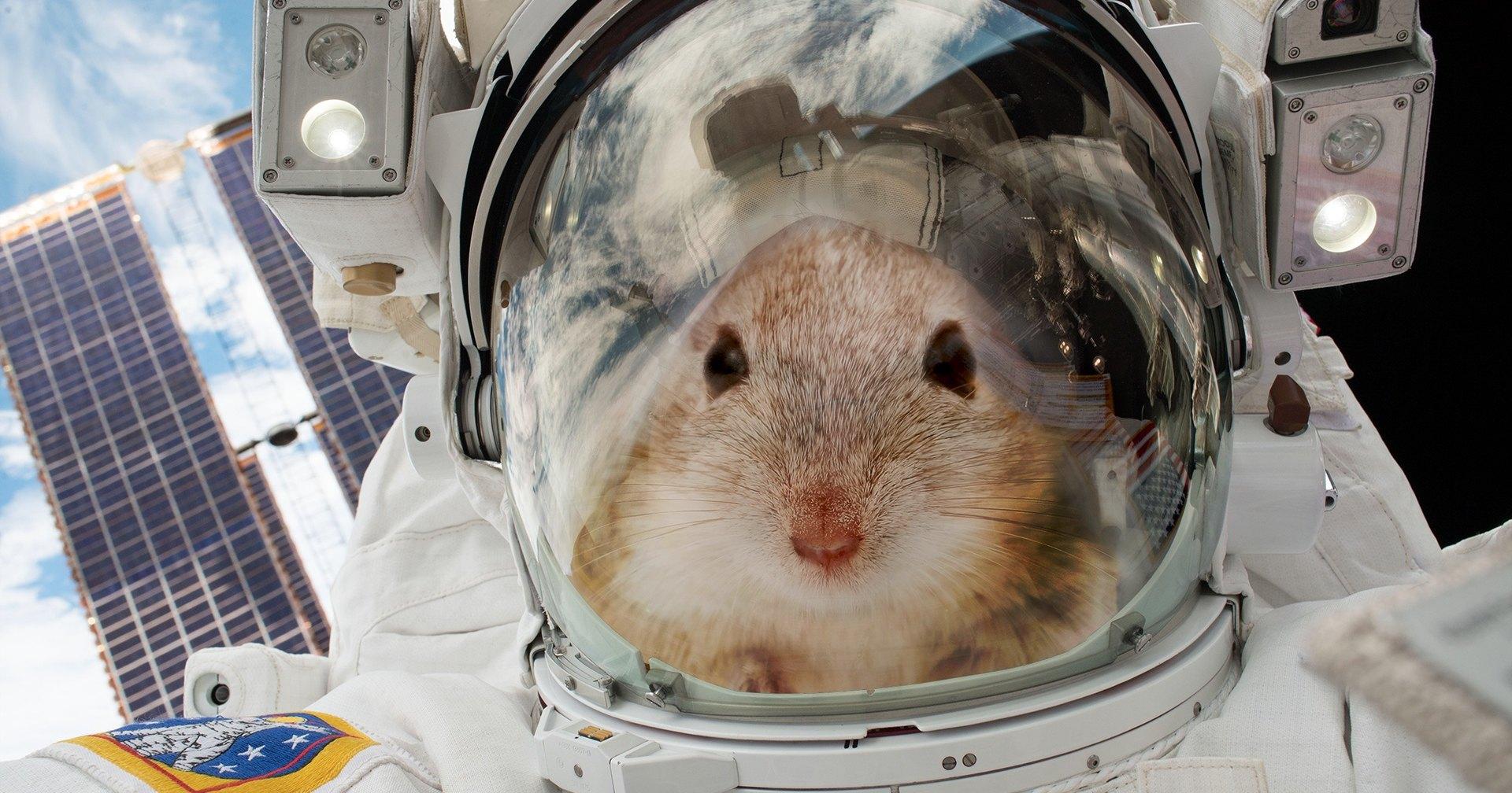 Мыши отправились в космос, чтобы помочь людям полететь на Марс