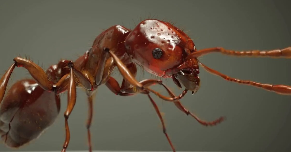Шедевры визуализации: муравьи-убийцы, вымирающие кораллы и девятая планета