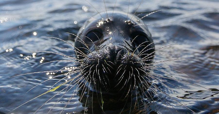В балтийских водах концентрация кислорода упала до минимума за 1500 лет