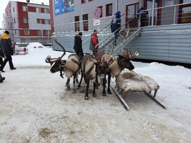 Север, воля, надежда, страна без границ (с), или Как делаются проекты в суровых сибирских условиях - 15