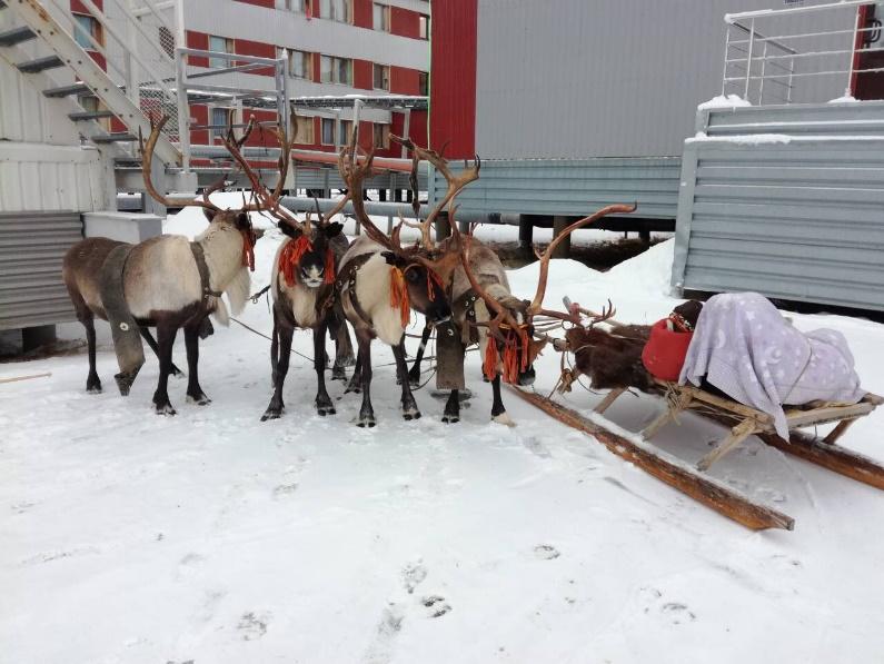 Север, воля, надежда, страна без границ (с), или Как делаются проекты в суровых сибирских условиях - 16