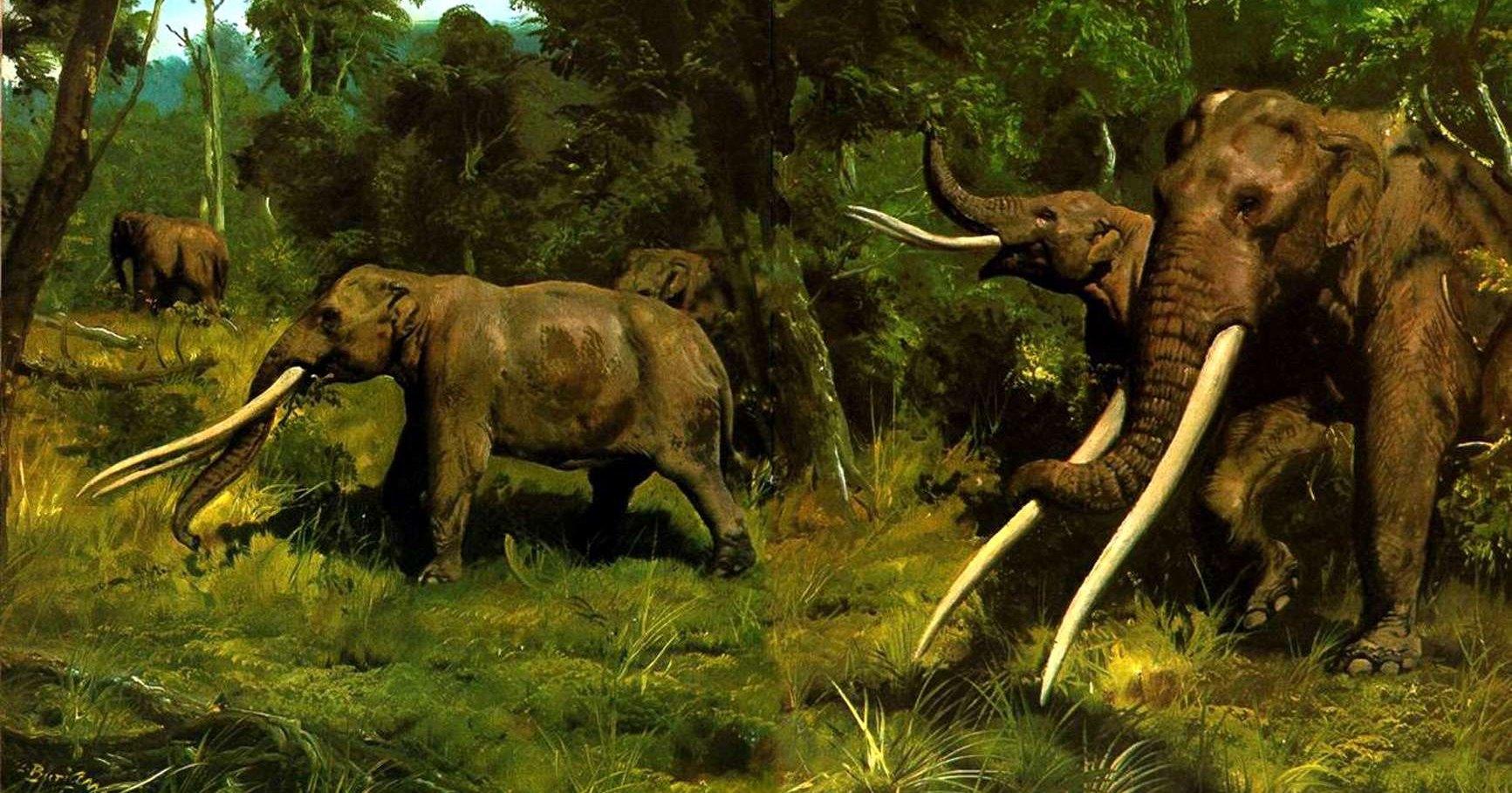 Во Франции обнаружили череп мастодонта