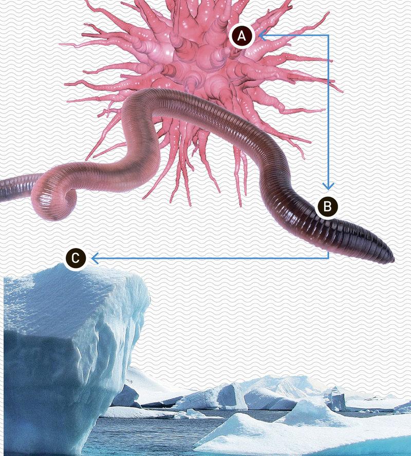 Что общего у кишечной флоры и Антарктиды?