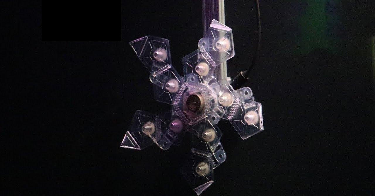 Новый робот-оригами умеет ловить морских созданий: помощь ученым