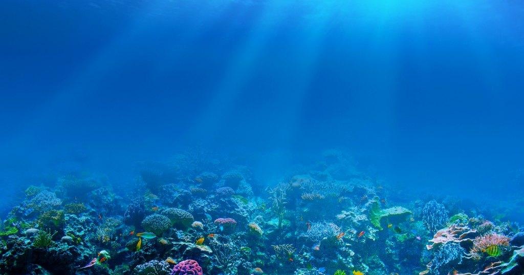 87% мирового океана подвергается воздействию человека
