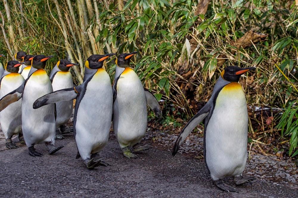 WireGuard «придет» в ядро Linux — почему? - 1