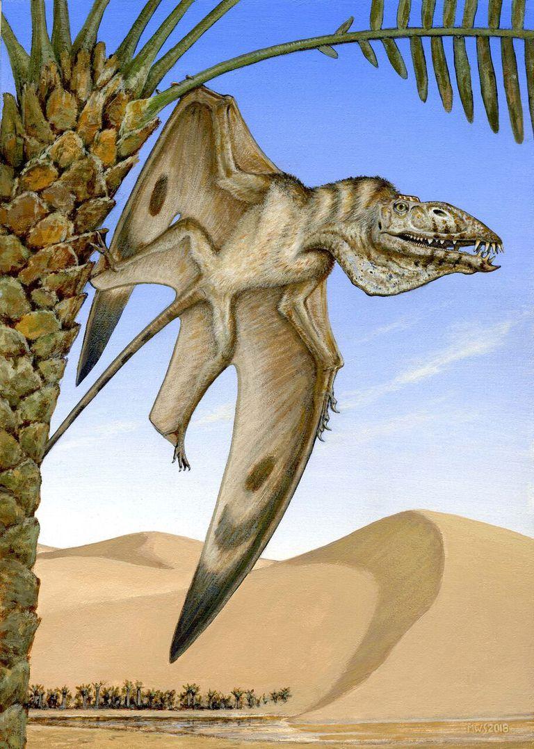 Самый древний птерозавр был похож на пеликана - 2