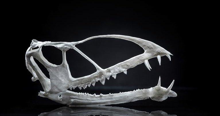 Самый древний птерозавр был похож на пеликана