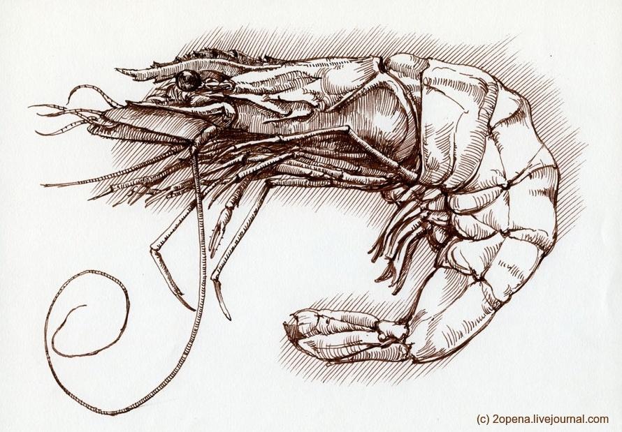 Делаем Shrimp еще полезнее: добавляем перекодирование картинок в другие форматы - 1