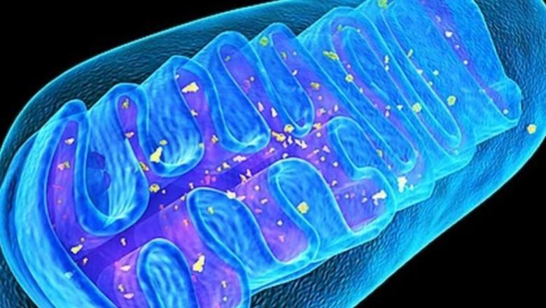 SENS-диагностика. Биомаркеры митохондриальной дисфункции и окислительного стресса - 1