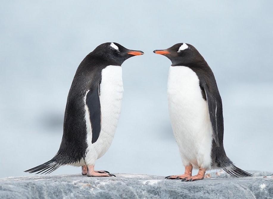 Ситуация: закрыты две уязвимости в TCP-стеке ядра Linux - 2