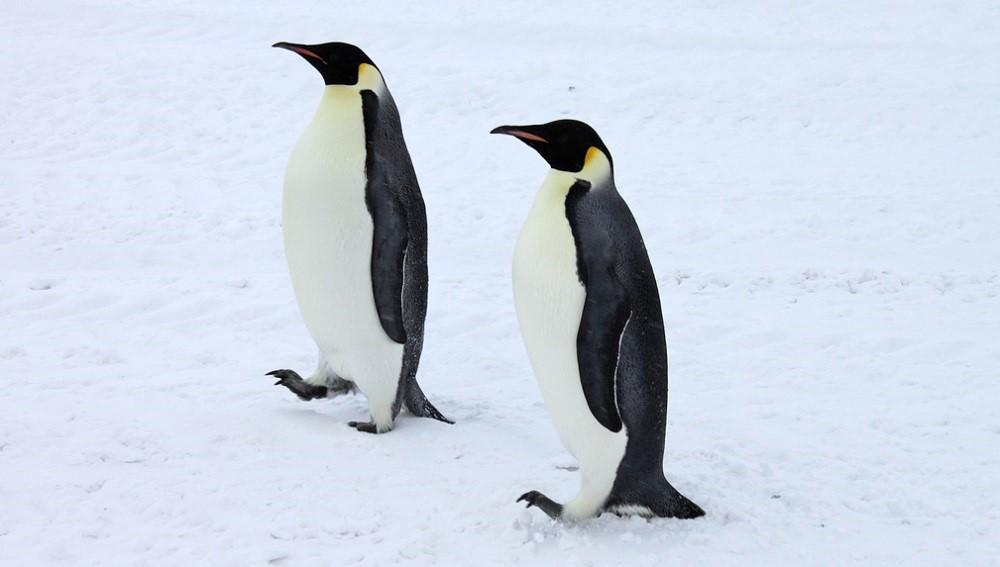 Ситуация: закрыты две уязвимости в TCP-стеке ядра Linux - 1