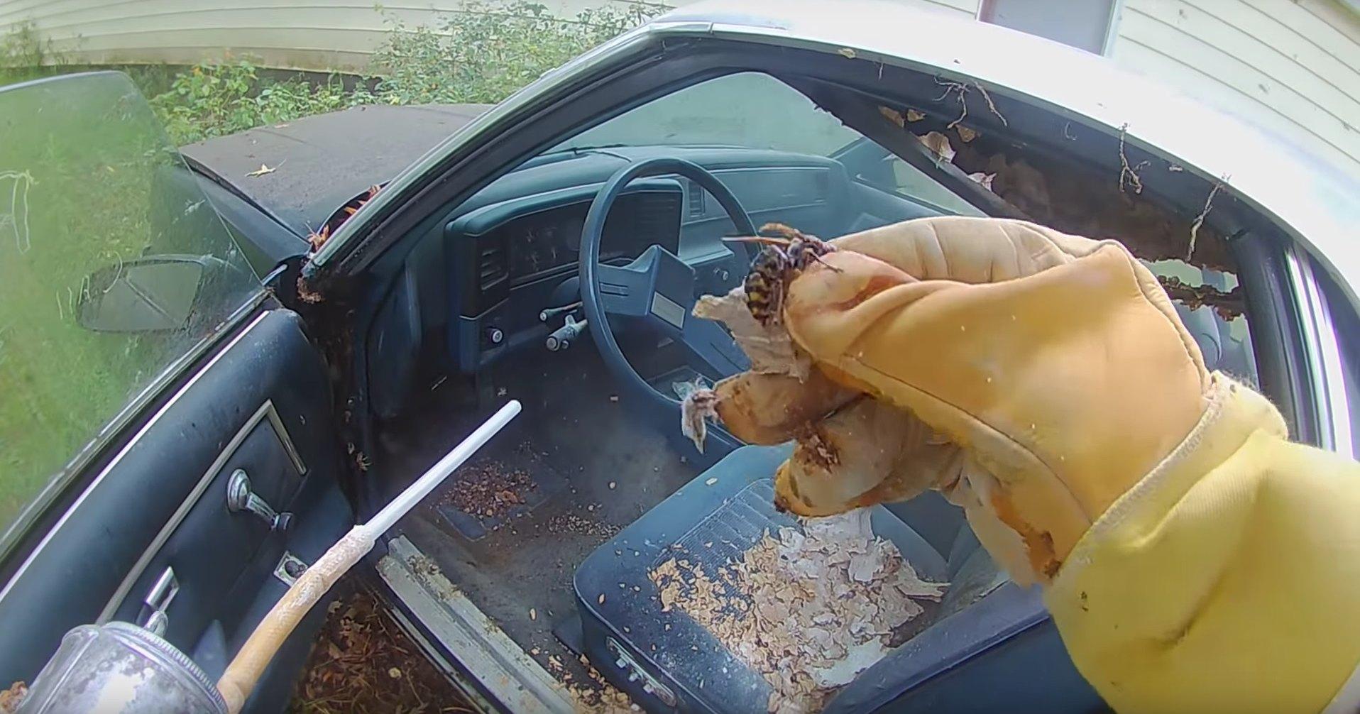 Шершни сделали гнездо из старого автомобиля