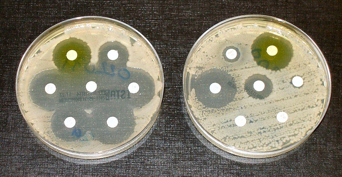 Впервые за 50 лет разработан новый класс антибиотиков, действующих на грамотрицательные бактерии - 1