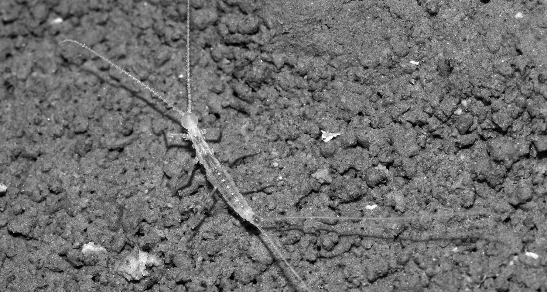 В пещере на востоке Туркменистана нашли неизвестное науке животное