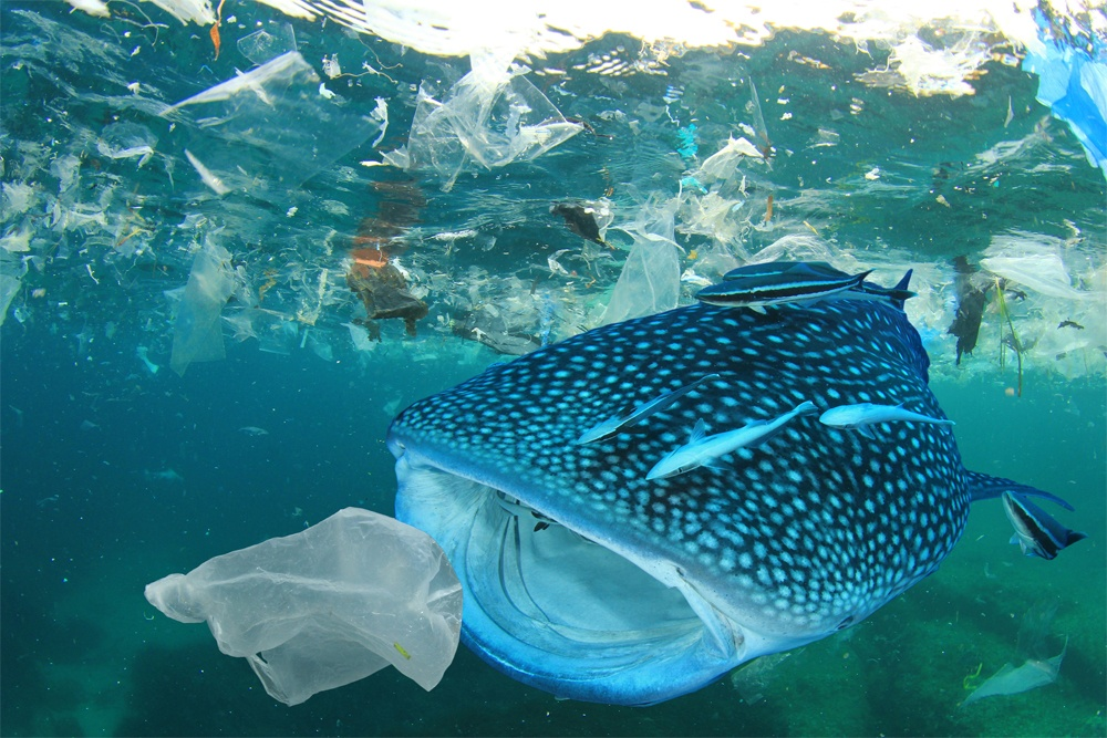 Европа запретила использование одноразового пластика - 1