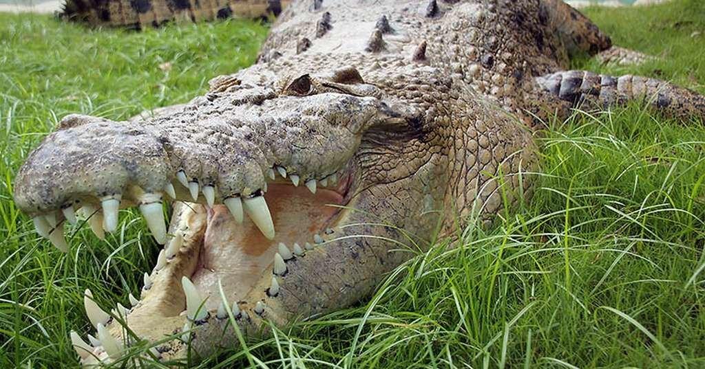 Названы самые опасные животные Австралии