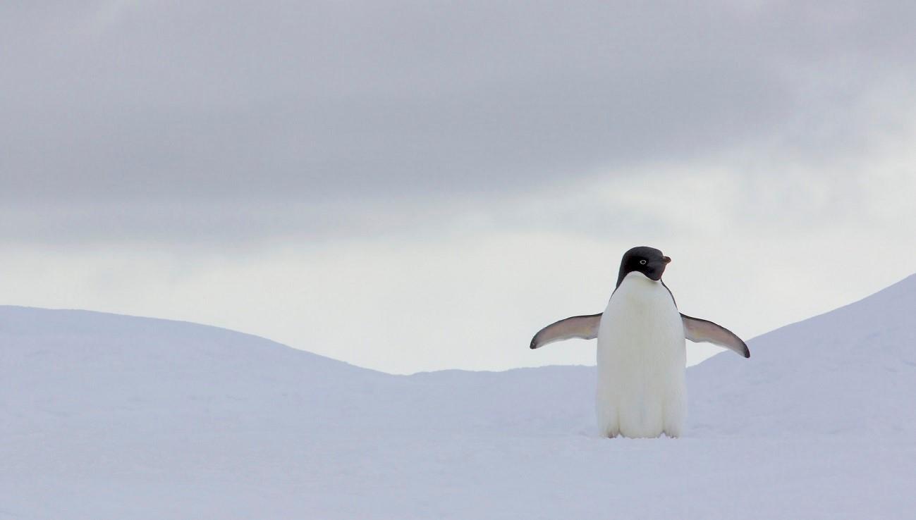 Вышел Linux 4.20 — что изменилось в новой версии ядра - 1