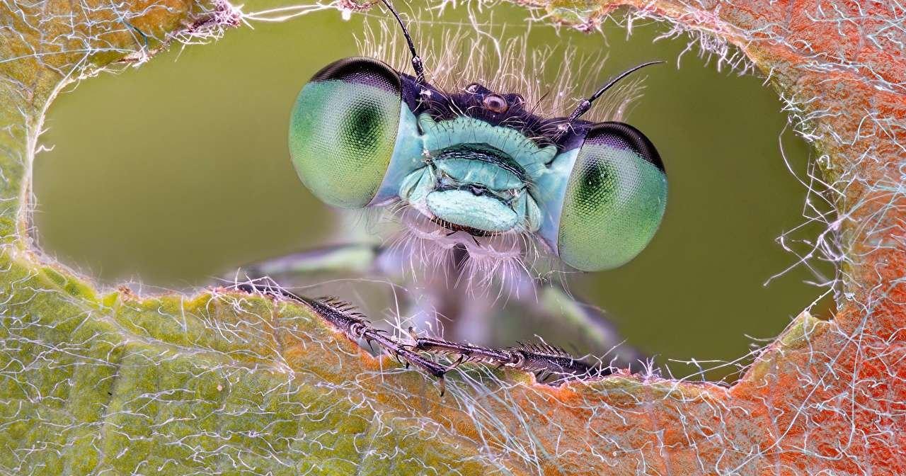 Создан искусственный глаз насекомого